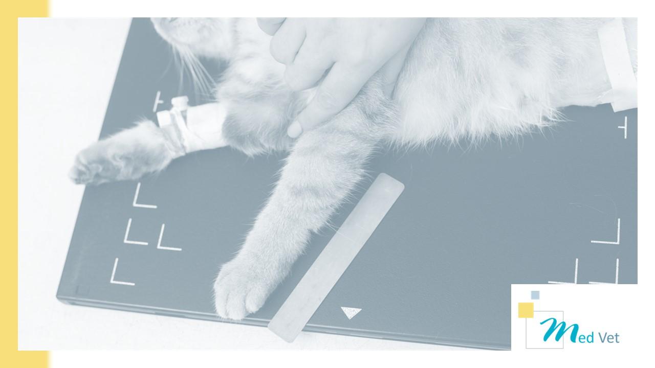 Med Vet - Capteur Plan & Console d'acquisition pour le vétérinaire